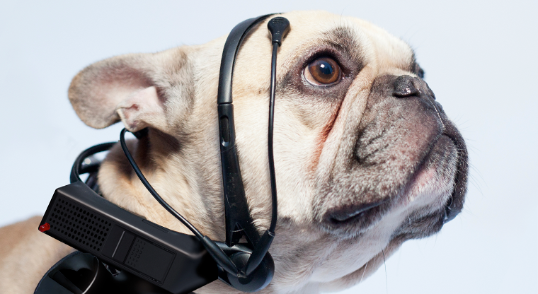 A tubular update to the UI of a dog collar.